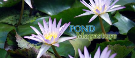 Pond Megastore