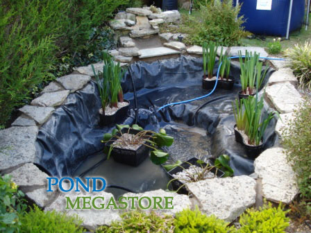 Welcome spring water garden blog water lilies and pond for Using pond water for plants