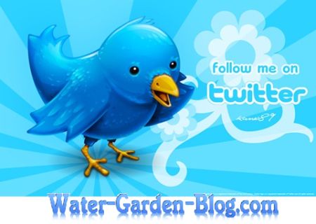 water-garden-blog-follow